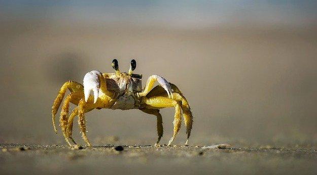 Capturar cangrejos en la playa